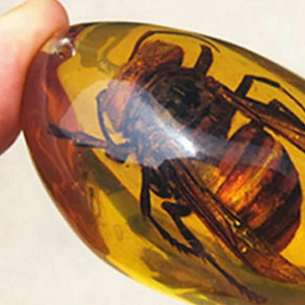 Gelbe Bernstein Bienen natürliche Insekten Bernstein Exemplare
