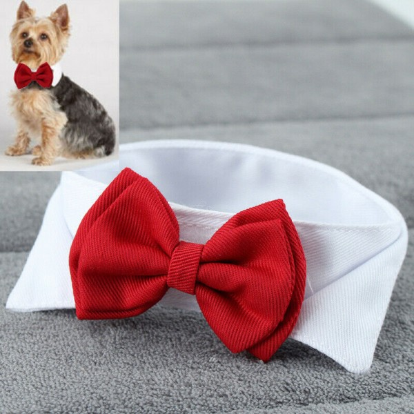 Verstellbare Fliege für Hund und Katze
